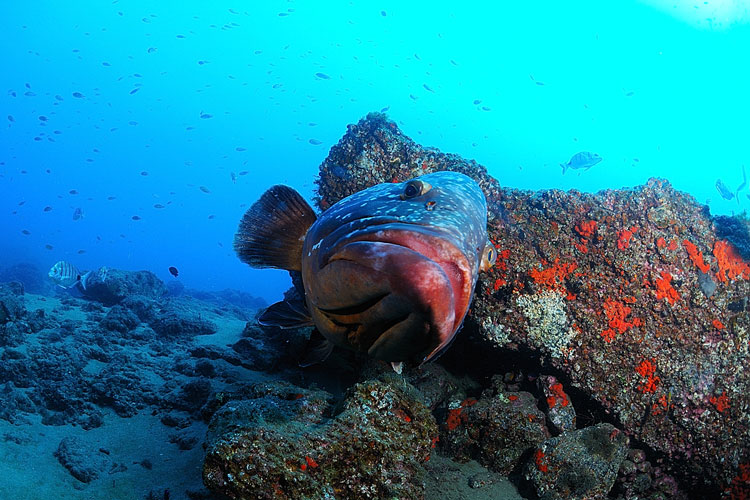 Grouper house reef safari diving