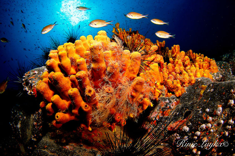 House reef safari diving